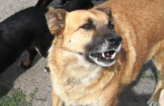 В Псковской области собака насмерть загрызла трехлетнего ребенка